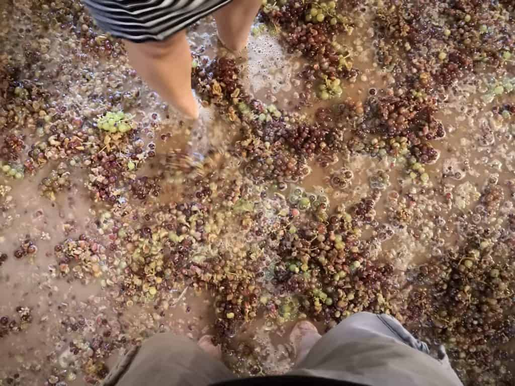 crushing grapes with feet