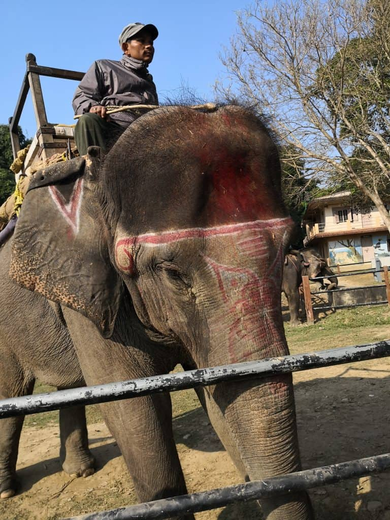 our elephant chitwan