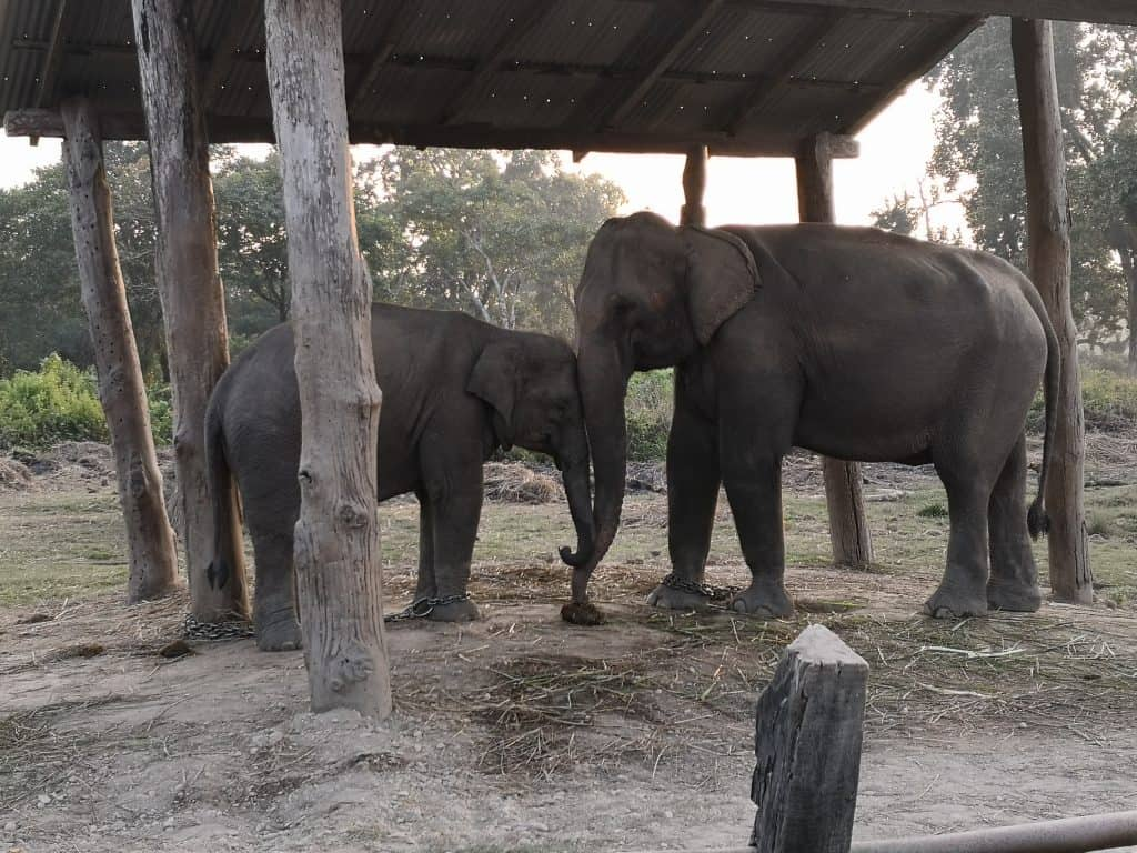 chitwan elephant breeding sanctuary