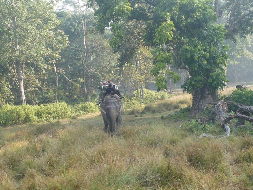 elephant chitwan