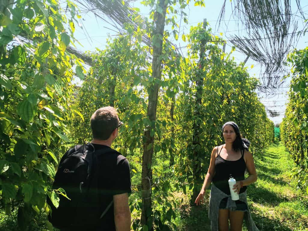 bo tree pepper farm kampot