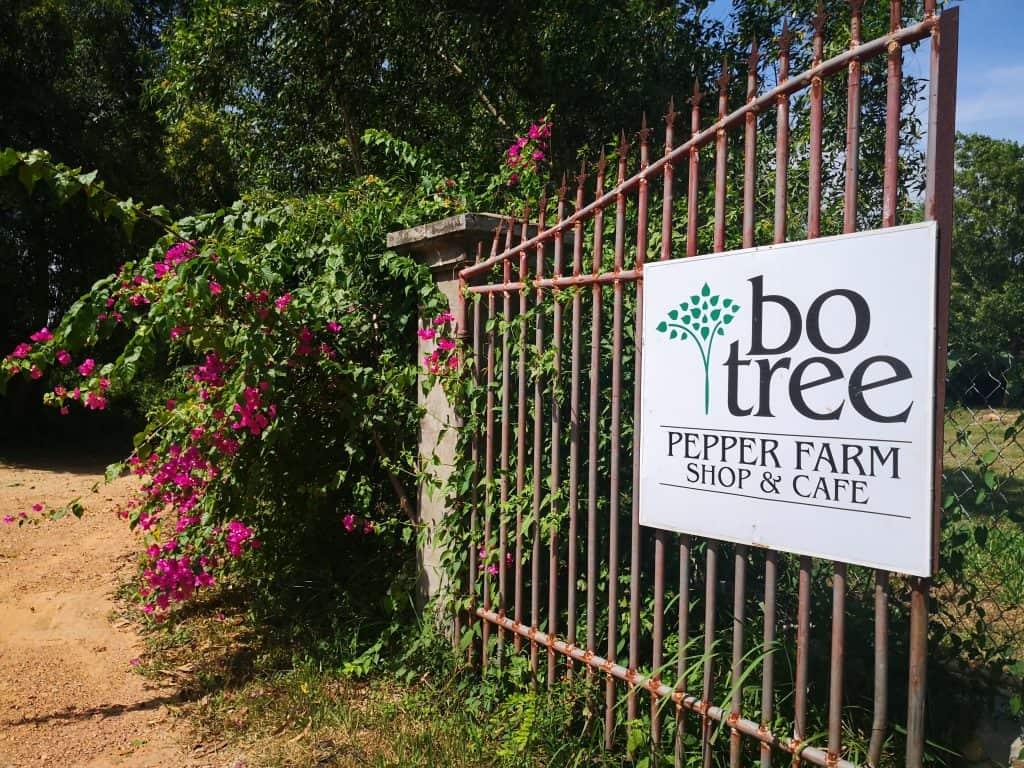 bo tree pepper farm kampot